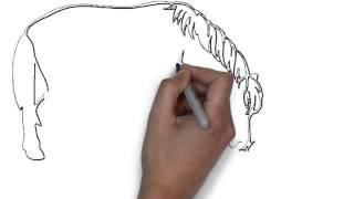 Как нарисовать лошадь(Заказать видео историю( doodle или 3d) о вашем товаре или услуге можно, пройдя по ссылке http://gordrich.com/wppage/5475-2 больш..., 2013-11-20T13:54:14.000Z)