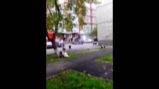 Бродячие собаки опасны город Тюмень ул.Свердлова