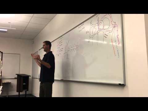 Neurological A&P for Paramedics Part 1