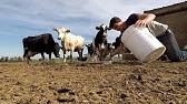 No-till Drill Prep and Farm Chores