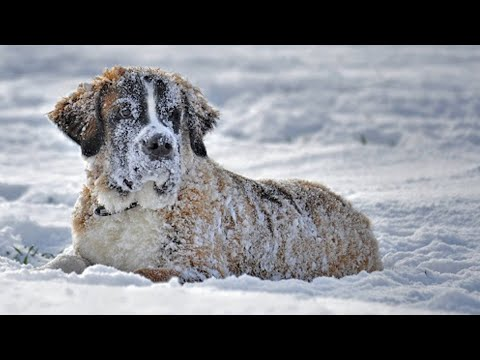 Продрогшая собака замерзала в снегу, но то что было у неё под животом заставляло её жить