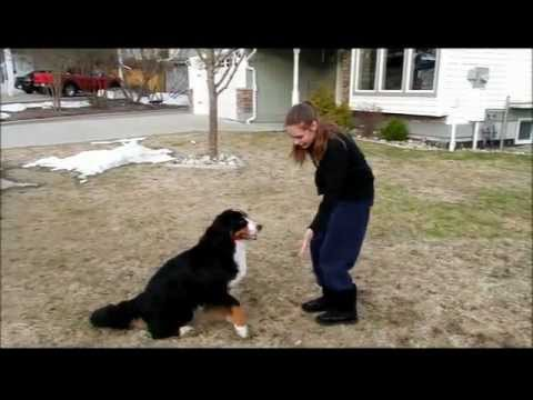 Nellie Champion Trick Dog Application
