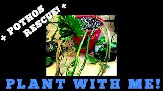PLANT WITH ME! A POTHOS RESCUE!❤