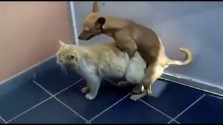 New Funny Dogs and Cats videos 2018