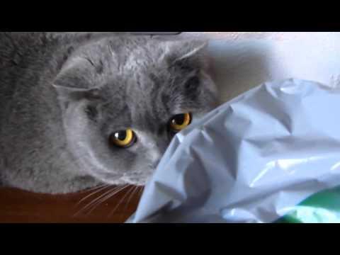 Смешные провинившиеся кошки. Подборка Топ 7