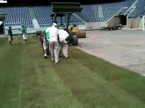 Tri-Tex Grass at Reliant Stadium in Houston, Texas