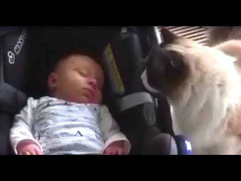 Timo the Cat Meets Baby (for the first time)