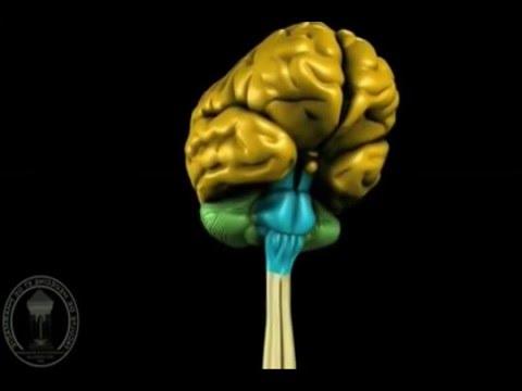 Проводящие пути спинного мозга. Особенности нейронной
