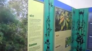 पचमढ़ी ( हिल स्टेशन ) में वानिकी संग्रहालय ...