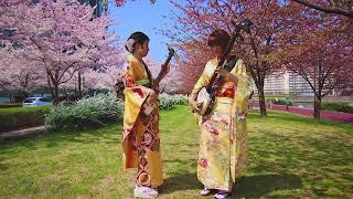 Shamisen Under The Cherry Blossoms 2018