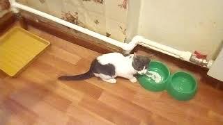 Кот и фен война 1