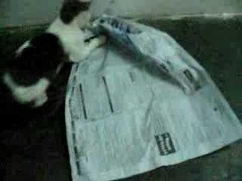 cat love newspaper 2
