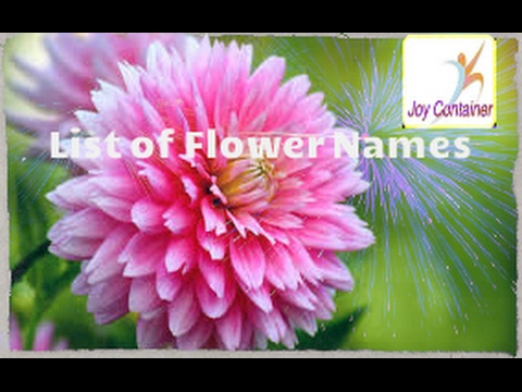 learn  list  pictures  of  flowers  names  for  kids, Beautiful flower