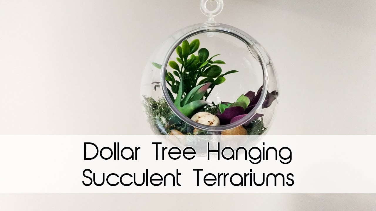 Hanging Succulent Terrariums All Dollar Tree Supplies Diy Decor