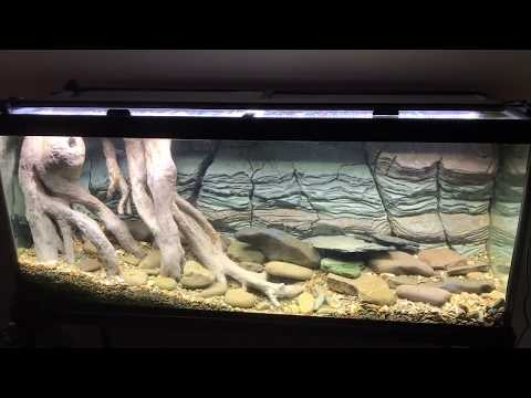 us-native-stream-tank-with-diy-3d-styrofoam-rock-wall-background-&-diy-roots-update