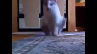 Кот чешет жопу об ковер!!!!