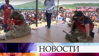 В Армении из поколения в поколение мастера передают уникальное искусство стрижки овец.