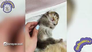 Самый Милый Котёнок В Мире