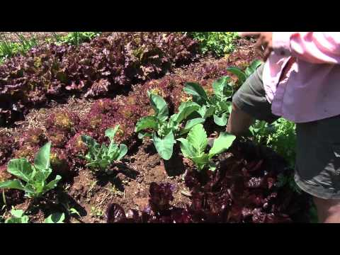 Official Trailer - Sustainable Farming Documentary