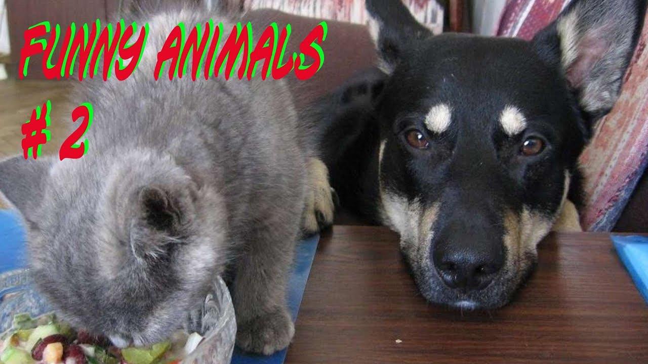 Фотки с животными и надписями
