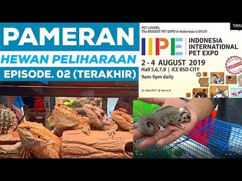 PAMERAN HEWAN PELIHARAAN DI IIPE 2019   Episode. 02 (Terakhir)
