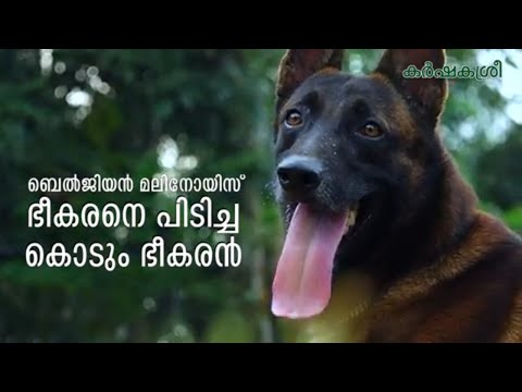 | Belgian Malinois Dogs | Karshakasree Episode 1 | Manorama Online