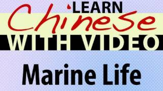 Learn Chinese with Video - Marine Life