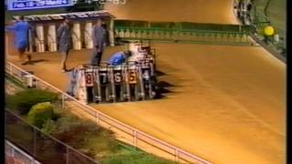 Two greyhound races from Olympic Park, Melbourne, 1985