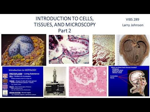 Medical School Histology Basics - Introduction to Microscopy 2: Cells, Tissues, and Organelles