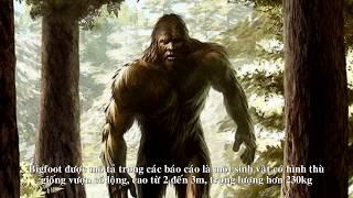 Quái vật Bigfoot có thật bị camera quay lại | Bí ẩn trên thế giới