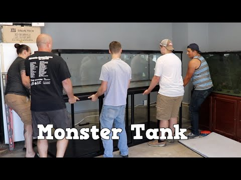 Picking Up Our Monster Tank! Transporting A Huge Fish Tank! Dream Aquarium Is Here!