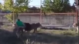 Когда батя пришел пьяный  Смешные короткие видео про животных и хозяев 720p
