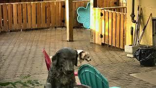Outside Dog Yard Cam 08-15-2018 16:01:03 - 17:01:04