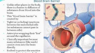 Chapter 13 - The Brain and Cranial Nerves - Part 1