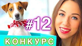 РОЗЫГРЫШ #12 - НОВЫЙ КОНКУРС   ИГРУШКИ ДЛЯ КОШЕК   СОБАКИ И КОШКИ   Elli Di Pets