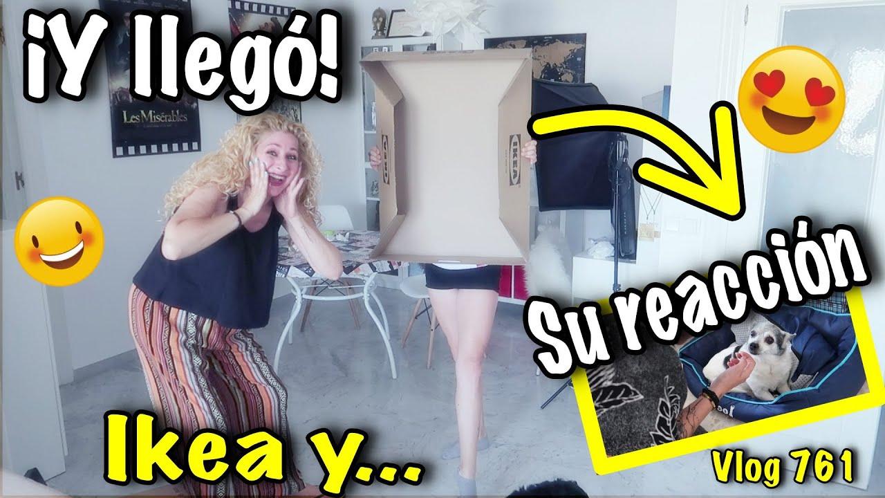 Haul IKEA por....SORPRESA😁 La reacción más dulce de su perrita  Vlog 761 Alicia Cuenta