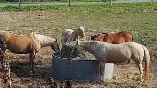 Лошади на диете?  Животные, животный мир, Аnimals,Tiere