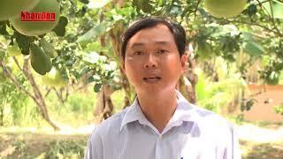 Thực hiện nghị quyết : Cù Lao Dung chuyển đổi cây trồng, vật nuôi để tái cơ cấu nông nghiệp