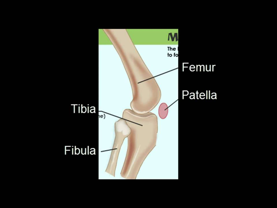 Human Knee Anatomy (HD) - YouTube