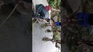 करंट से मछली पकड़ना ( पौड़ी गढ़वाल उत्तराखंड)