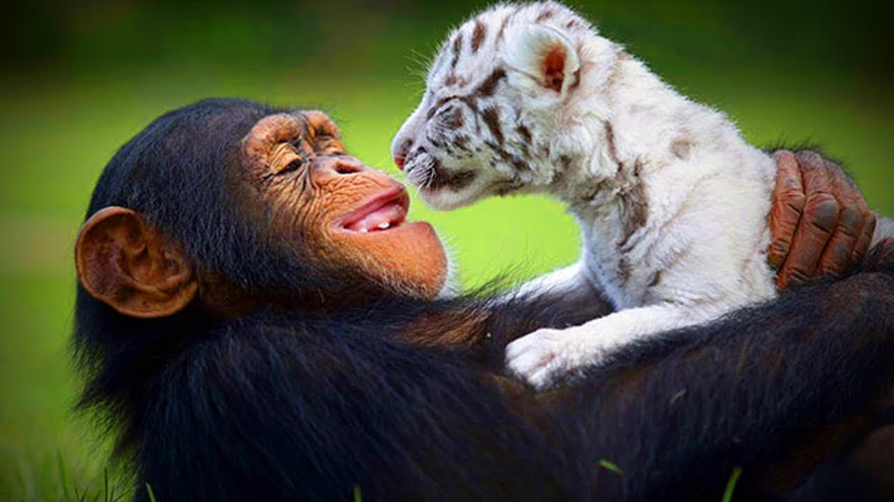 Animals Best Friends Unbelievable Friendship