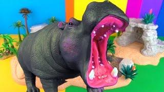 Happy Cute ZOO Animals WILDLIFE Watering Hole HOOFED FEET Toy Review HIPPOPOTAMUS  SuperFunReviews