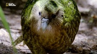 Nat Geo Wild - Secrets of the wild - Lost Worlds / Тайните на дивата природа - Изгубени светове