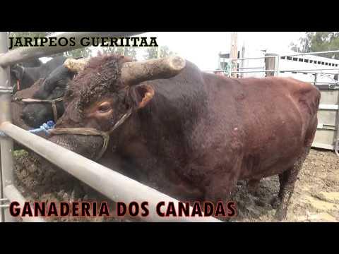 GANADERIA DOS CANADAS Y RANCHO EL RINCON EN DIXON, CA 03/18/18