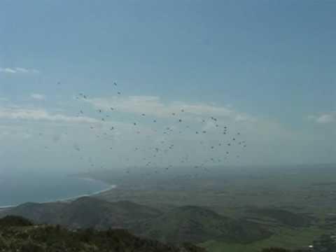 Bird migration at Cap Bon, Tunisia