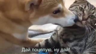 Прикольные животные.Смешные и забавные.Видео о животных