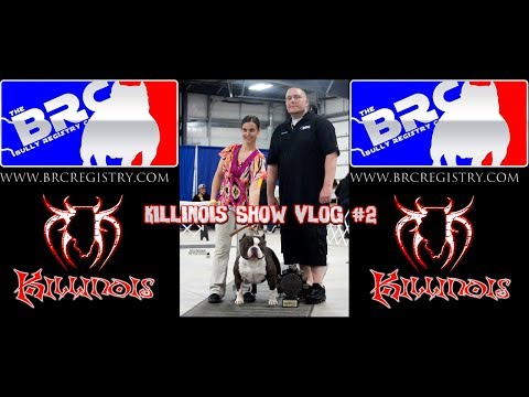KILLINOIS KENNELS SHOW VLOG #3  DOUBLE AMERICAN BULLY DOG SHOW HELD BY THE BRC IN DAVENPORT IOWA