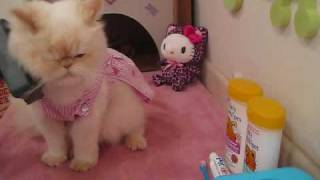 Luna the Fashion Kitty - Beauty Secrets!