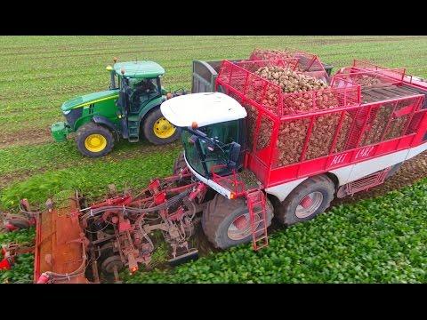 Sugarbeet Harvest 2016 UK | 2 Verveat Beet Harvesters