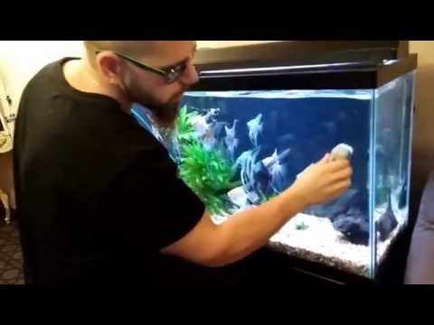 HOW TO CLEAN AN AQUARIUM THE RIGHT WAY